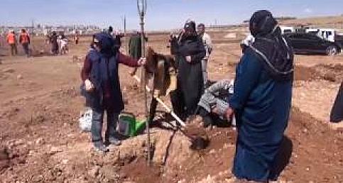 Kursiyer kadınlar ağaç dikti